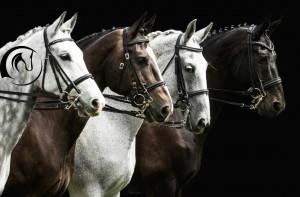 cavalos com logo trasparente5
