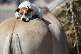 cao-e-cavalo-montado