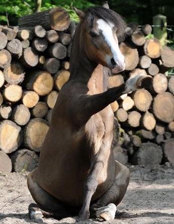 cavalo-pata